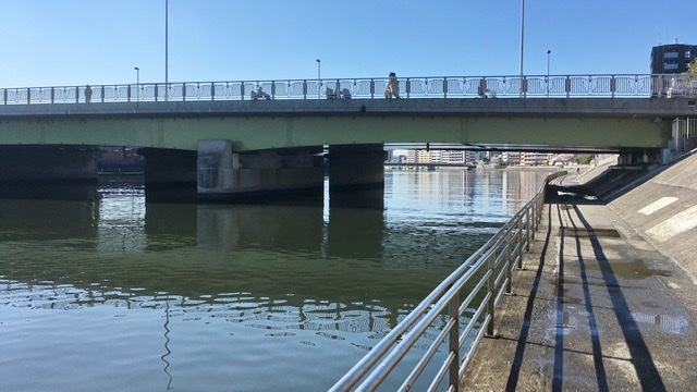 鶴見川右岸河川敷