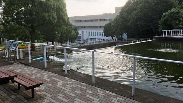 中央大学多摩キャンパスの池