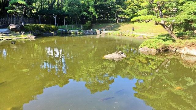 平塚市総合公園の日本庭園の池