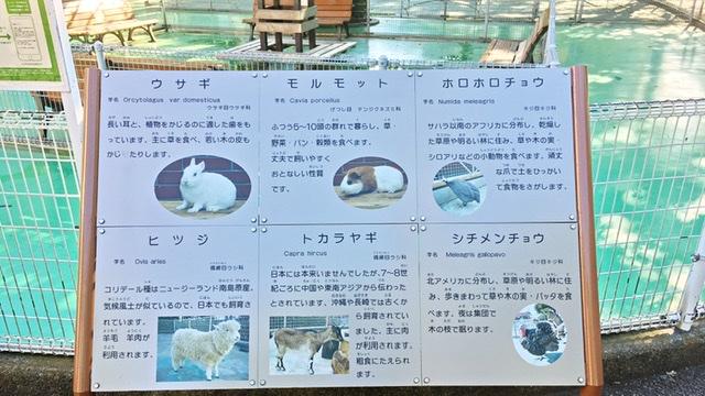平塚市総合公園のふれあい動物園の触れ合える種類