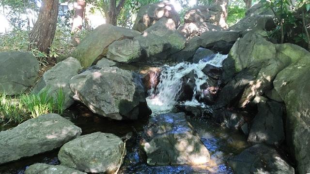 平塚市総合公園の日本庭園の滝