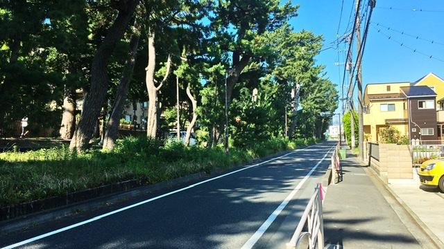 国道1号の防砂林