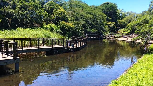 横浜市岸根公園の篠原池
